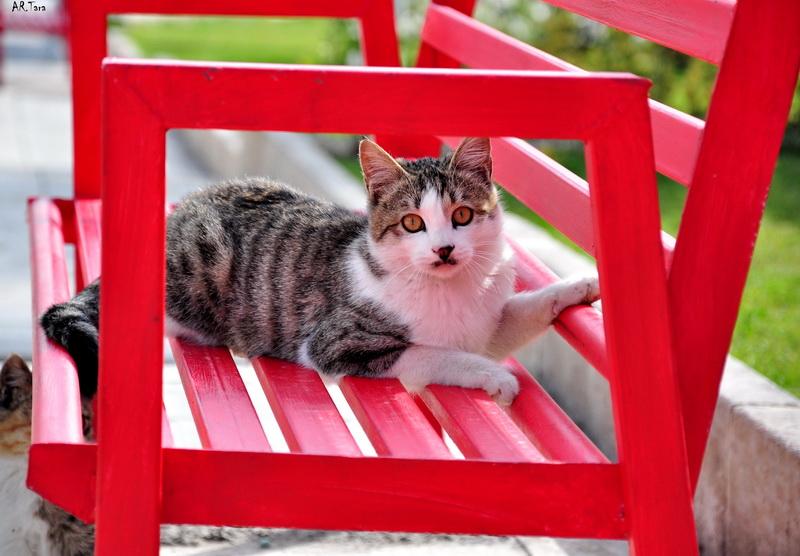http://artara74.persiangig.com/Images/Gorbe/DSC_9705%20R.jpg